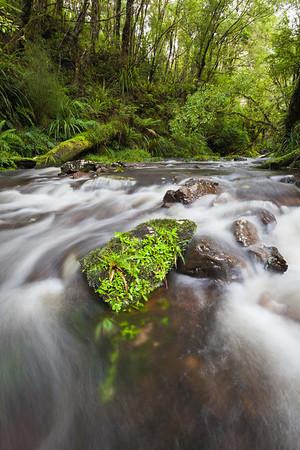 Blackwood Stream, Mangahao Makahika Track, Tararua Range, Manawatu