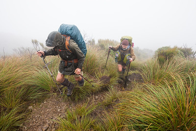 Two male Te Araroa trampers tramping in bad weather on Waiopehu Track, Tararua Forest Park