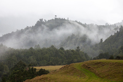 Misty native forest, Ohau Valley, Poads Road, Tararua Forest Park, Manawatu