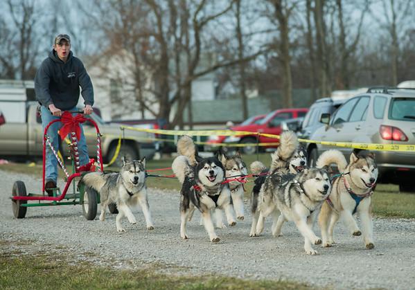 Tarnish's Malamutes Dog Sled Demonstration