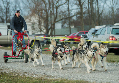 Tarnish's Malamutes Dog Sled Demonstration