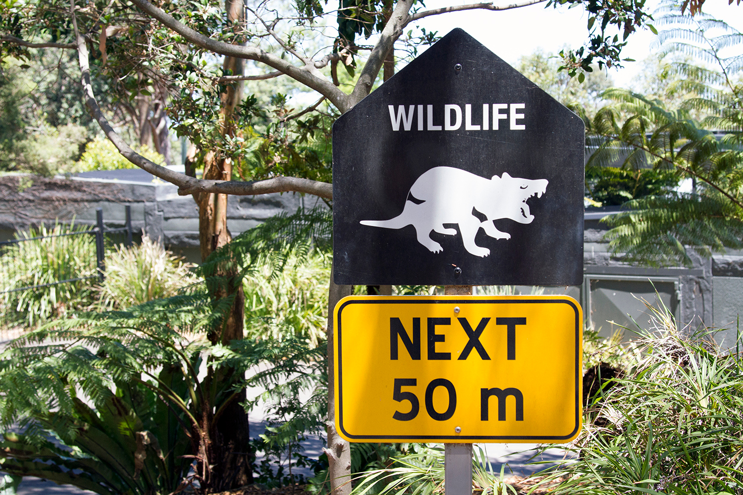 wildlife ahead