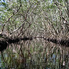 Mangrove Tunnel.