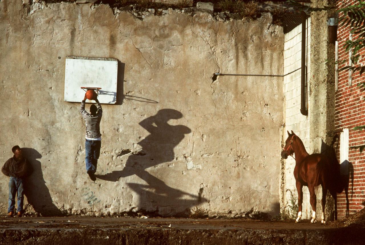 The Basket Ball Game