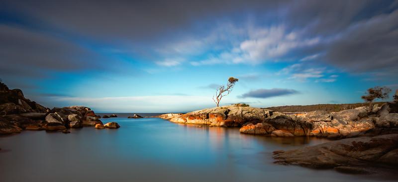 Lone Tree, Skeleton Bay