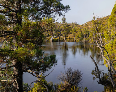 Dove lake is the largest, but the area is dotted with smaller lakes and ponds such as this one called wombat pool