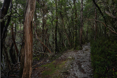 Many areas of temperate rain forest provide delightful hiking and adventure