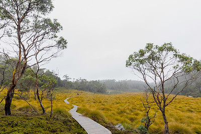 There are extensive hiking trails around Cradle Mountain many of which are well board walked with chicken wire to prevent slipping.