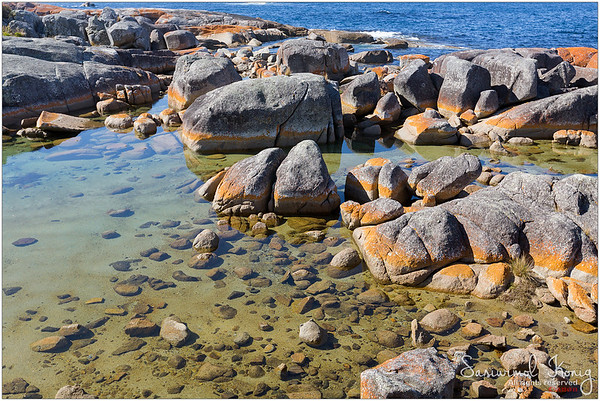 @Bay of Fires. Orange lichen growing on granite rocks