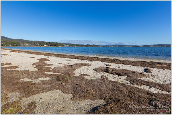 Seagrass washed ashore on Georges Bay, St Helens, on the north-east coast of Tasmania