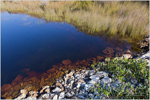 Dark, mysterious color of the Big Lagoon