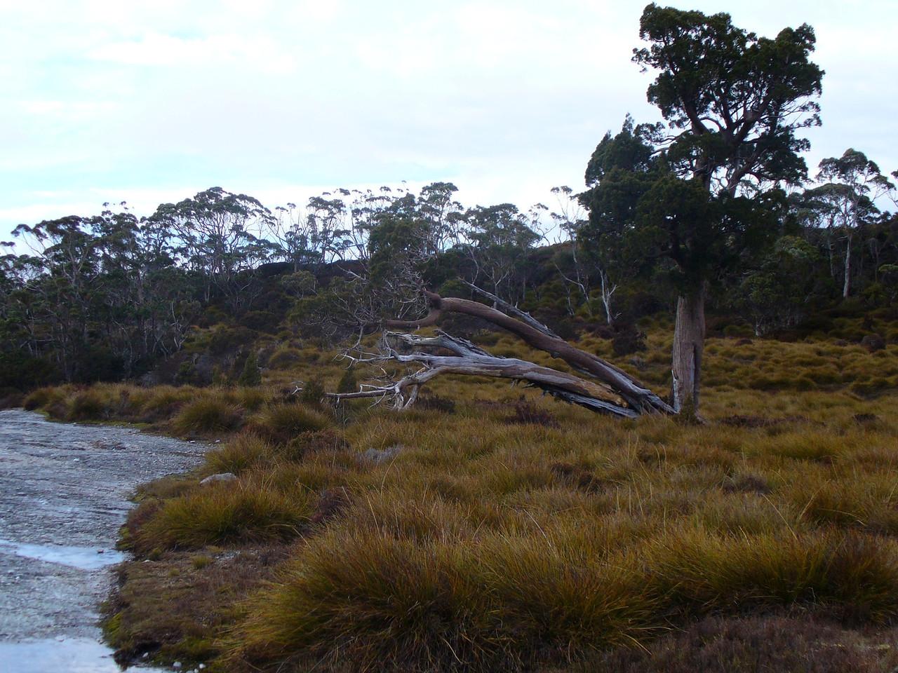 Vegetation beside Lake Will