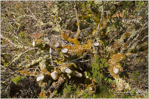 Lichen growing on branches