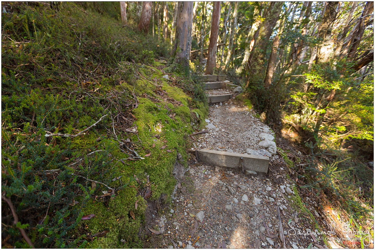 Lake Lilla track.. going down to Wombat Pool track