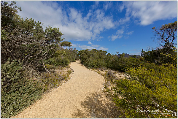 Curvy path to the iconic Cape Tourville Lighthouse lookout