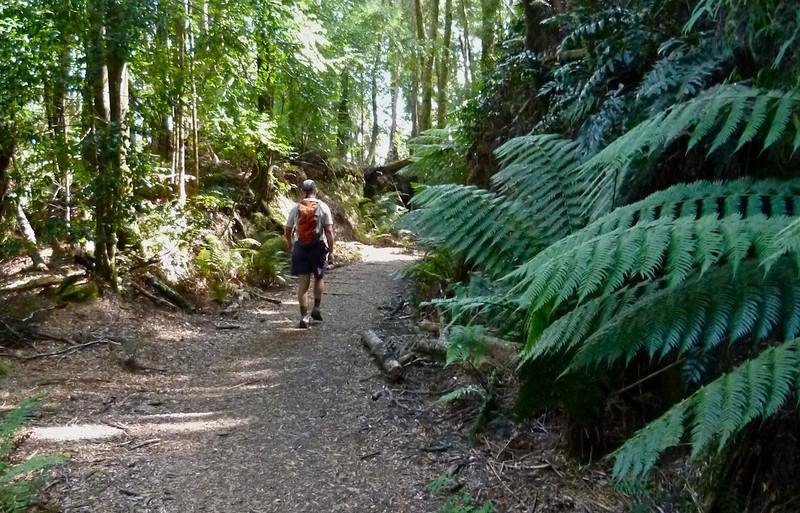 Montezuma Falls Track