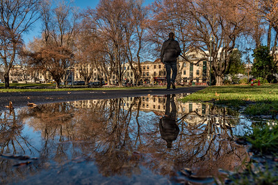 Reflection at Parliament House Gardens in Hobart.