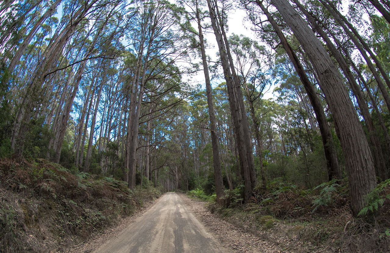 Driving on Bruny Island