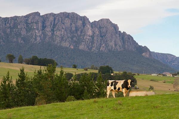 tasmanian road trip