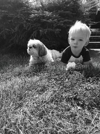Tate & Lilly dog