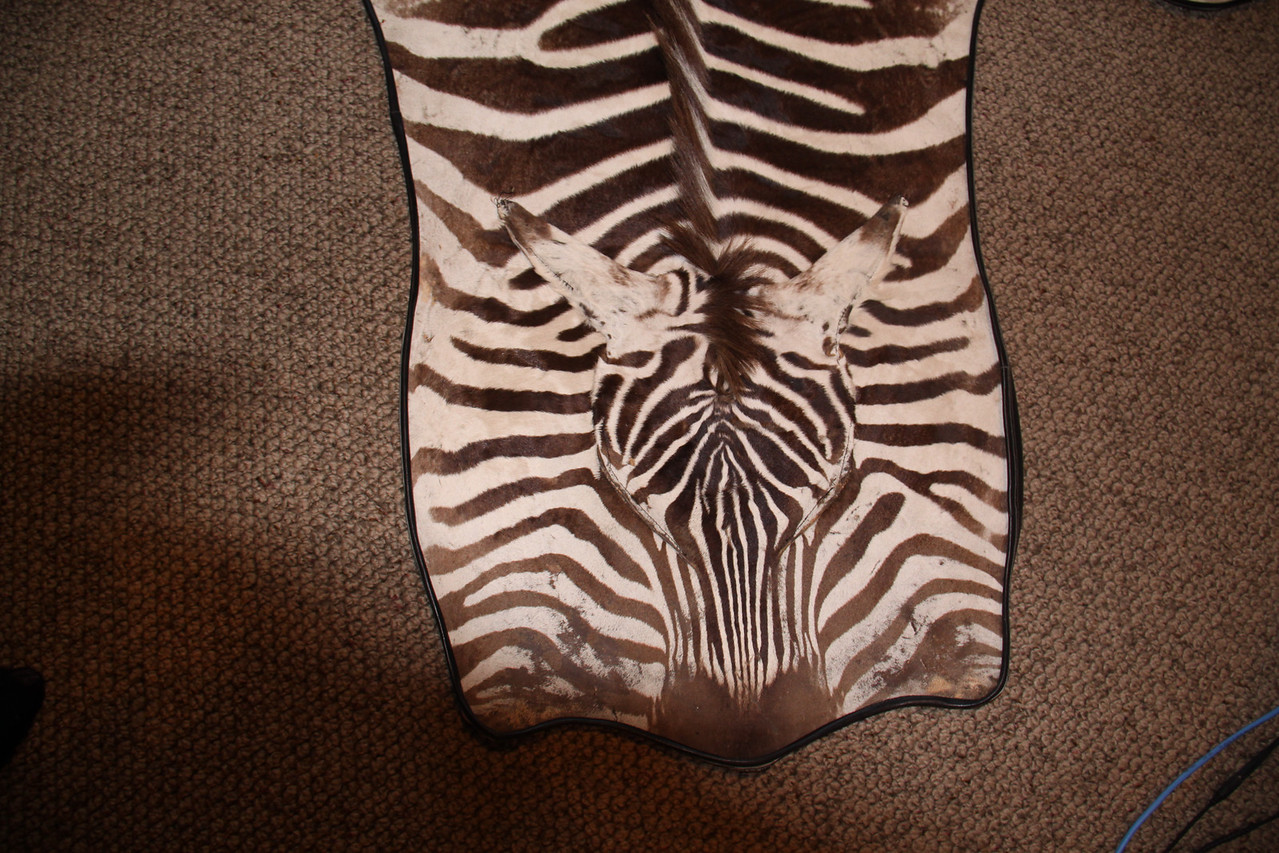 Zebra Rug, rolled edge backed with Naugahyde