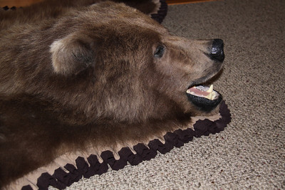 Brown Bear Rug, Pleated felt Anderson Taxidermy & Guide Service, Inc.  www.THEHUNTPRO.com