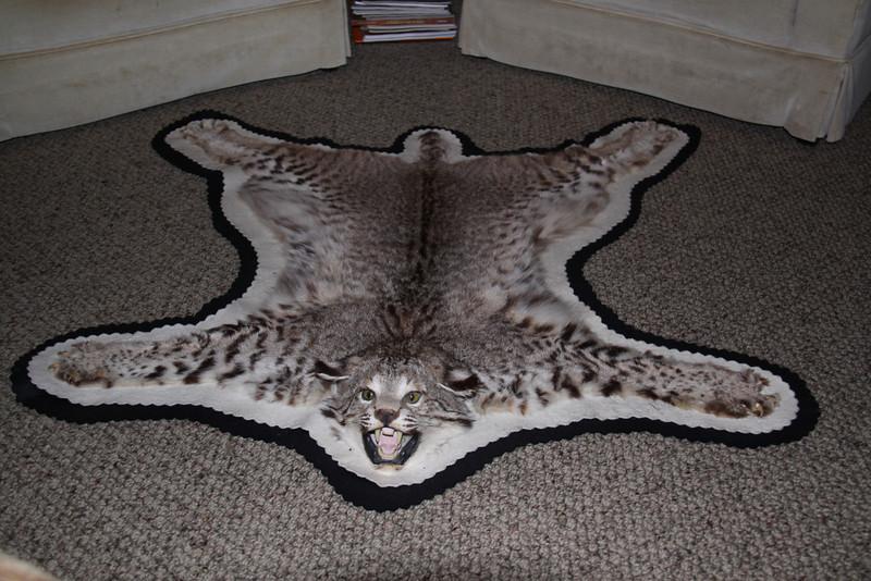 Bobcat Rug, Flat felt Anderson Taxidermy & Guide Service, Inc.  www.THEHUNTPRO.com