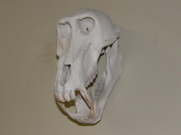 Horn & Skull Mounts