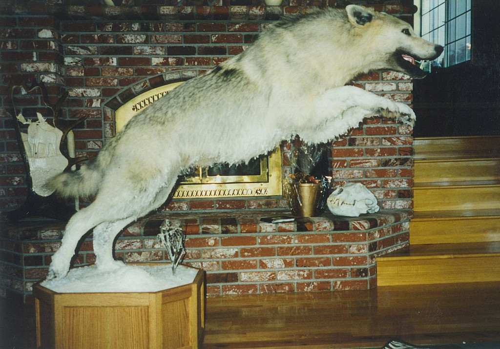 Life-size Wolf Mount
