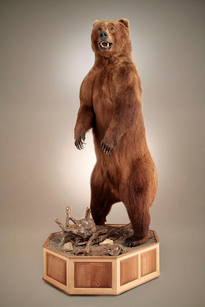 Life-size Alaska Brown Bear Mount