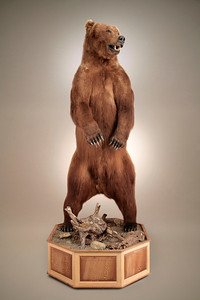 Life-size Alaska Brown Bear Mount Anderson Taxidermy & Guide Service, Inc.  www.THEHUNTPRO.com