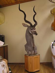 Kudu Pedestal Mount  Anderson Taxidermy & Guide Service, Inc.  www.THEHUNTPRO.com