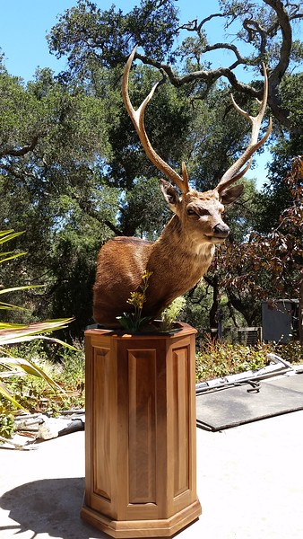 Sitka Deer Pedestal Mount