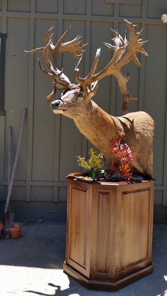 Red Stag Pedestal Mount