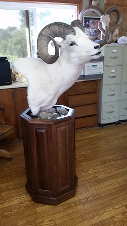 Dall Sheep Pedestal Mount
