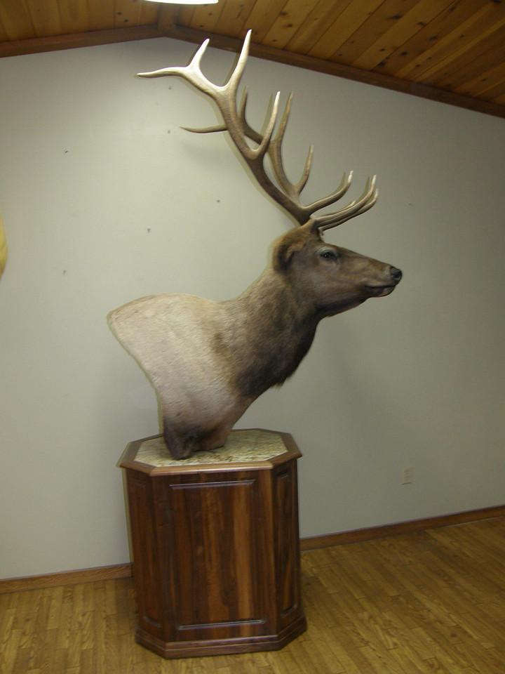 Roosevelt Pedestal Mount Anderson Taxidermy & Guide Service, Inc.  www.THEHUNTPRO.com