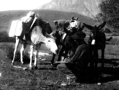 WF1908-06-Lemoyne on honeymoon, mules