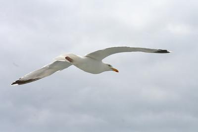 See a gull.......