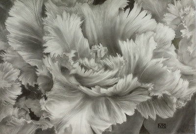 Morgan attended a class on Silverpoint given by Linda Funk at Phipps Conservatory and Botanical Gardens in Pennsylvania