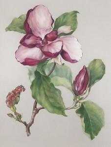 Jenny Phillip's flower