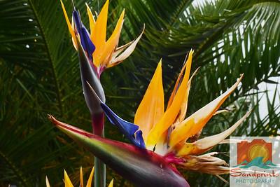 Bird of paradise f16