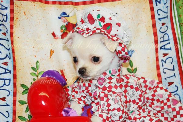 Custom Made Dog Dresses
