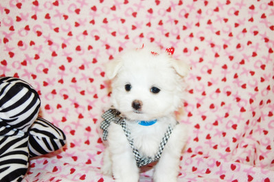 Gingham Bling Sundresses Item Number # PE US569  Gingham Bling Sundresses are a comfy yet flirty look for girl pups. Fashionable gingham dress with a glimmering rhinestone heart accent.  -----------------------------