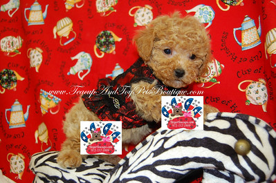Red Lace Flamenco Dog Dresses ITEM # US631  Material: 100% Polyester   Care: Machine wash in cold water on gentle cycle. Line dry.