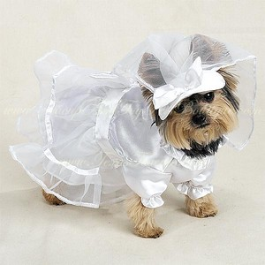 Item Number # PE 617 Puppy Dog  Wedding Dress  Pet Supply Directory with detailed information about our most popular pet products. Click here >http://www.teacuppetboutique.com/Pet_Supply_Directory.php  Or for online shopping cart Click Here > http://www.shop.texasteacups.com