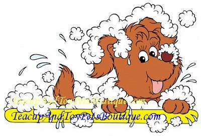 Dog Grooming Salon & Spa