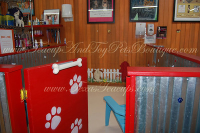 Our Puppy Playrooms. Bring your friends and family and come spend the day playing with our adorable puppies.
