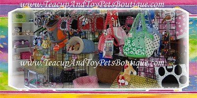 Large selection of budget and designer dog carriers.