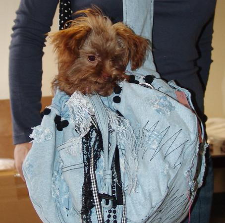 Sling Dog Carrier