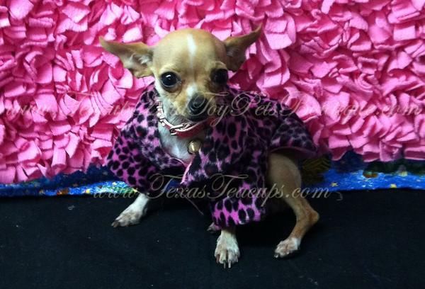 Leopard Print Dog Coat